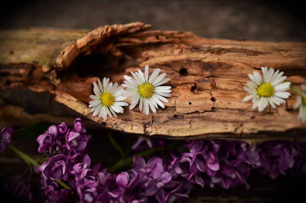 восстановление вашего тела с помощью лечебных растений