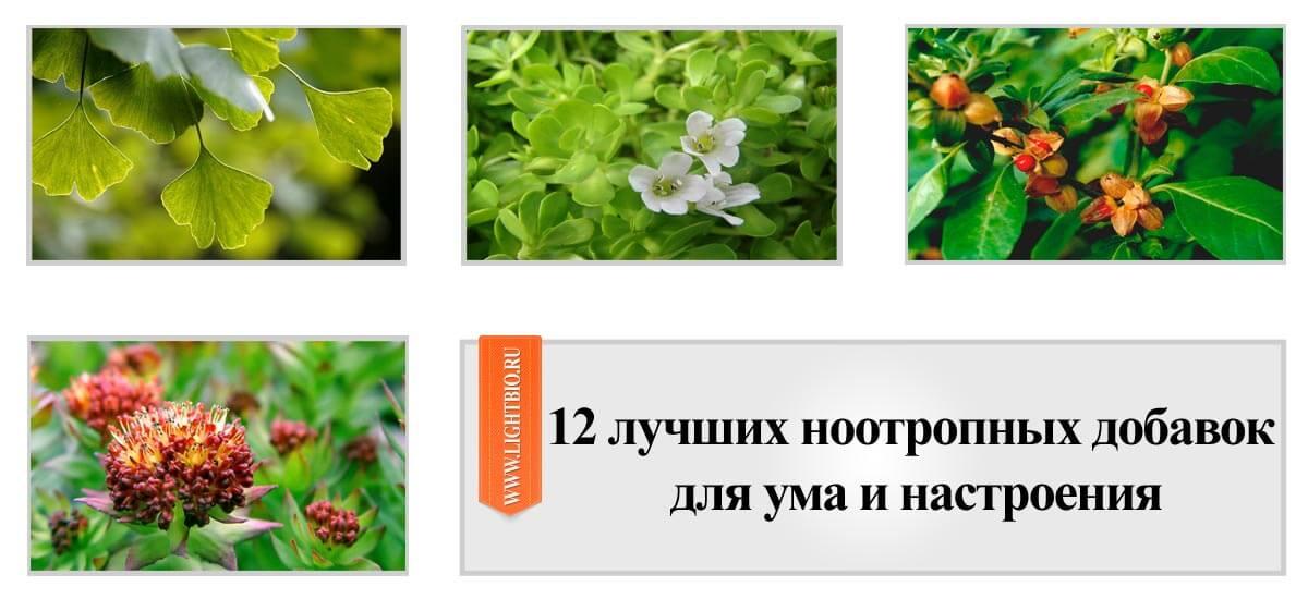 12 лучших ноотропных добавок для ума и настроения